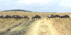 Mombasa to Masai Mara Safari