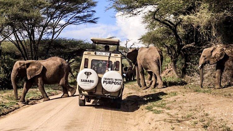 Sababu Safaris