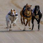 Brighton and Hove  Greyhound Track – 17th May 2013